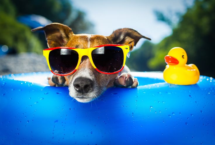 Dog Sunglasses.jpg