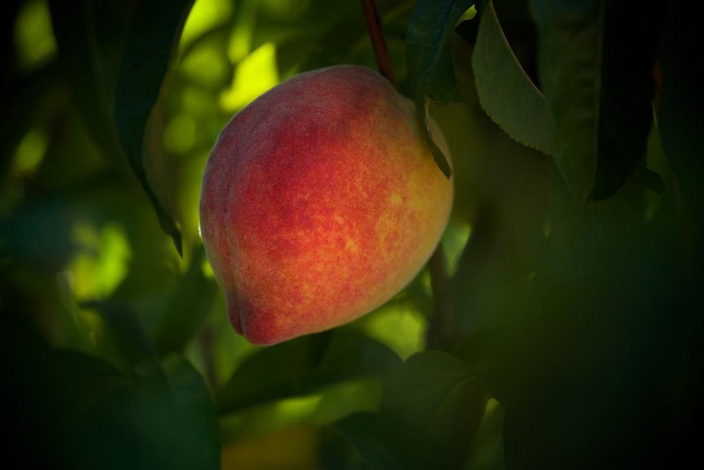peach-1-1024x683.jpg