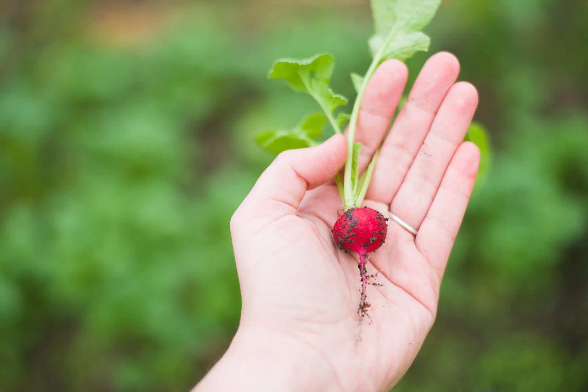 agriculture-biology-blur-238289.jpg