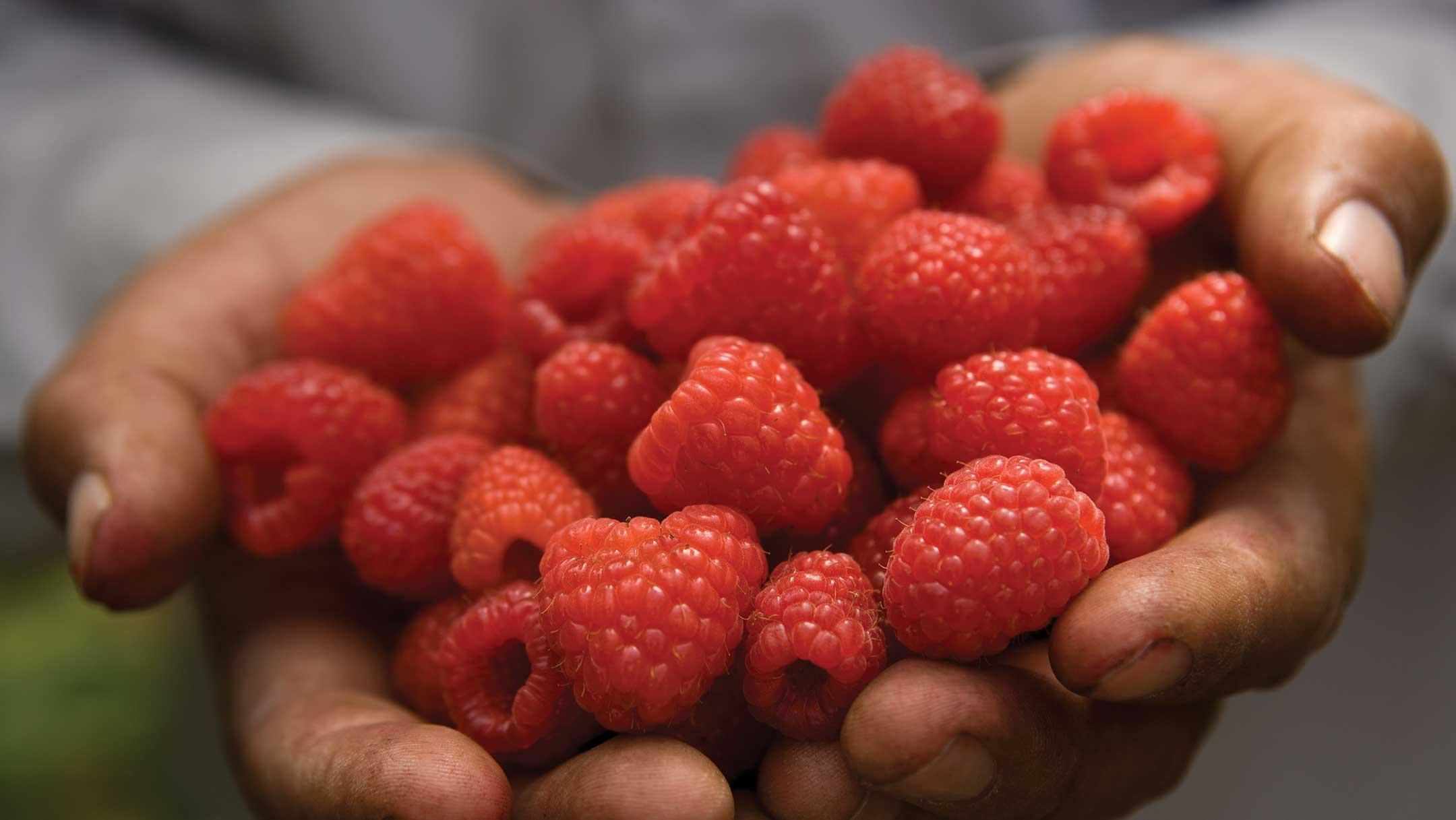 Raspberry_Hands.jpg