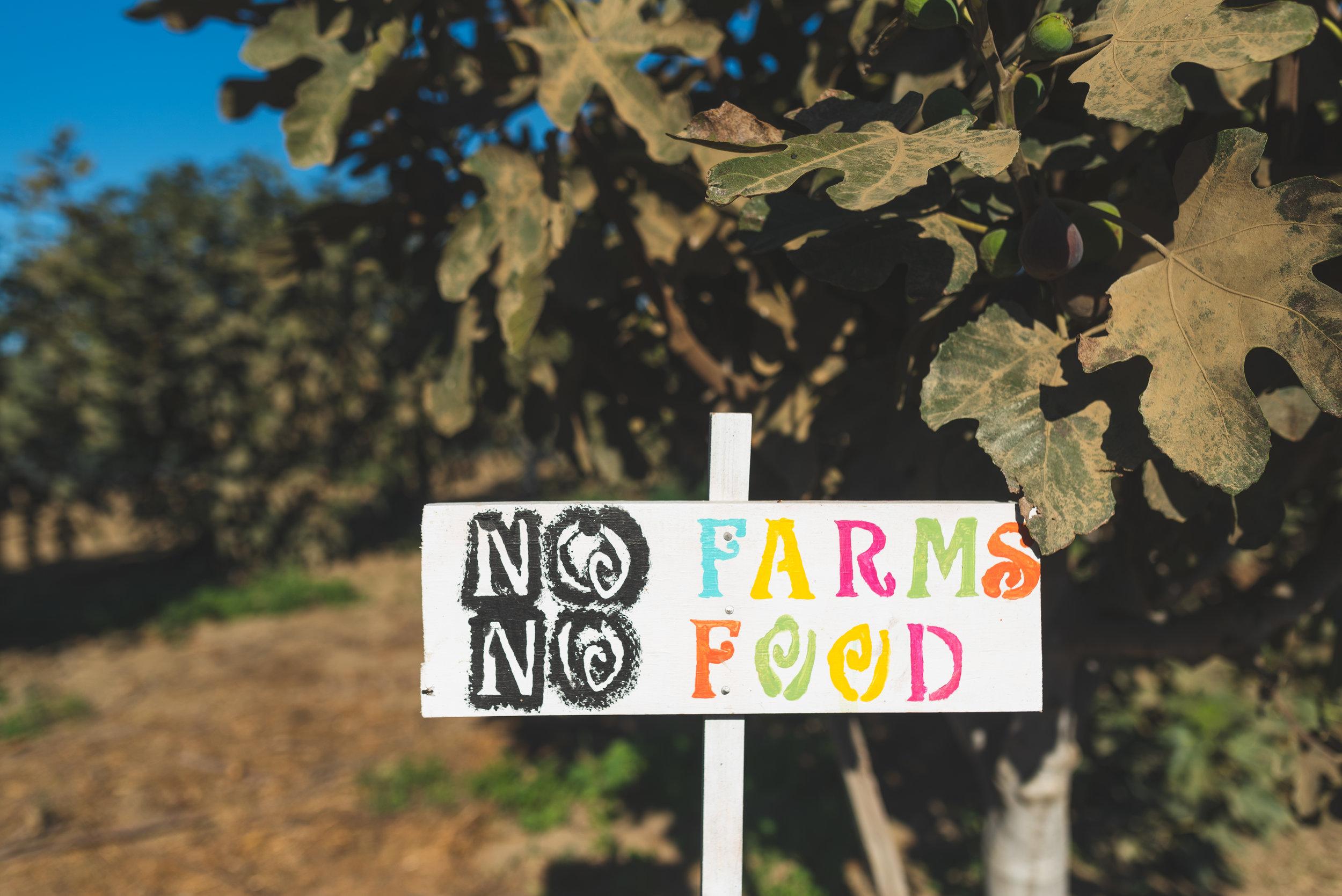 Farm-Day-2018-18.jpg