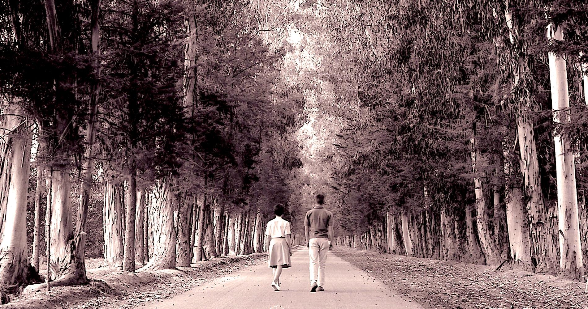 Trees-EucalyptusTrees.jpg