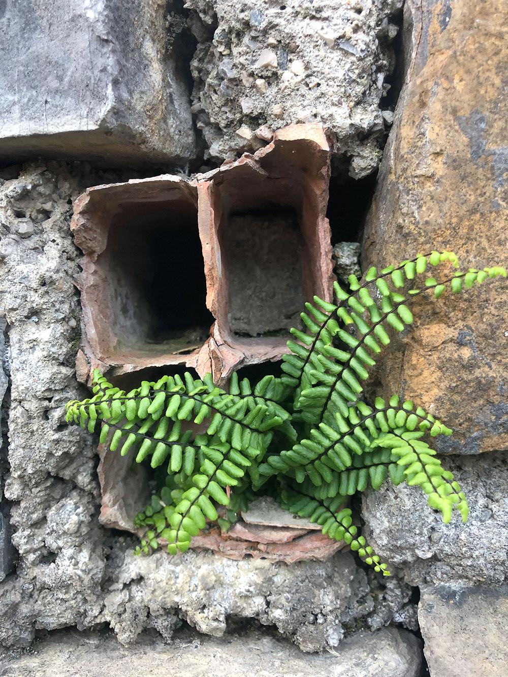 wall_flower-41.jpg