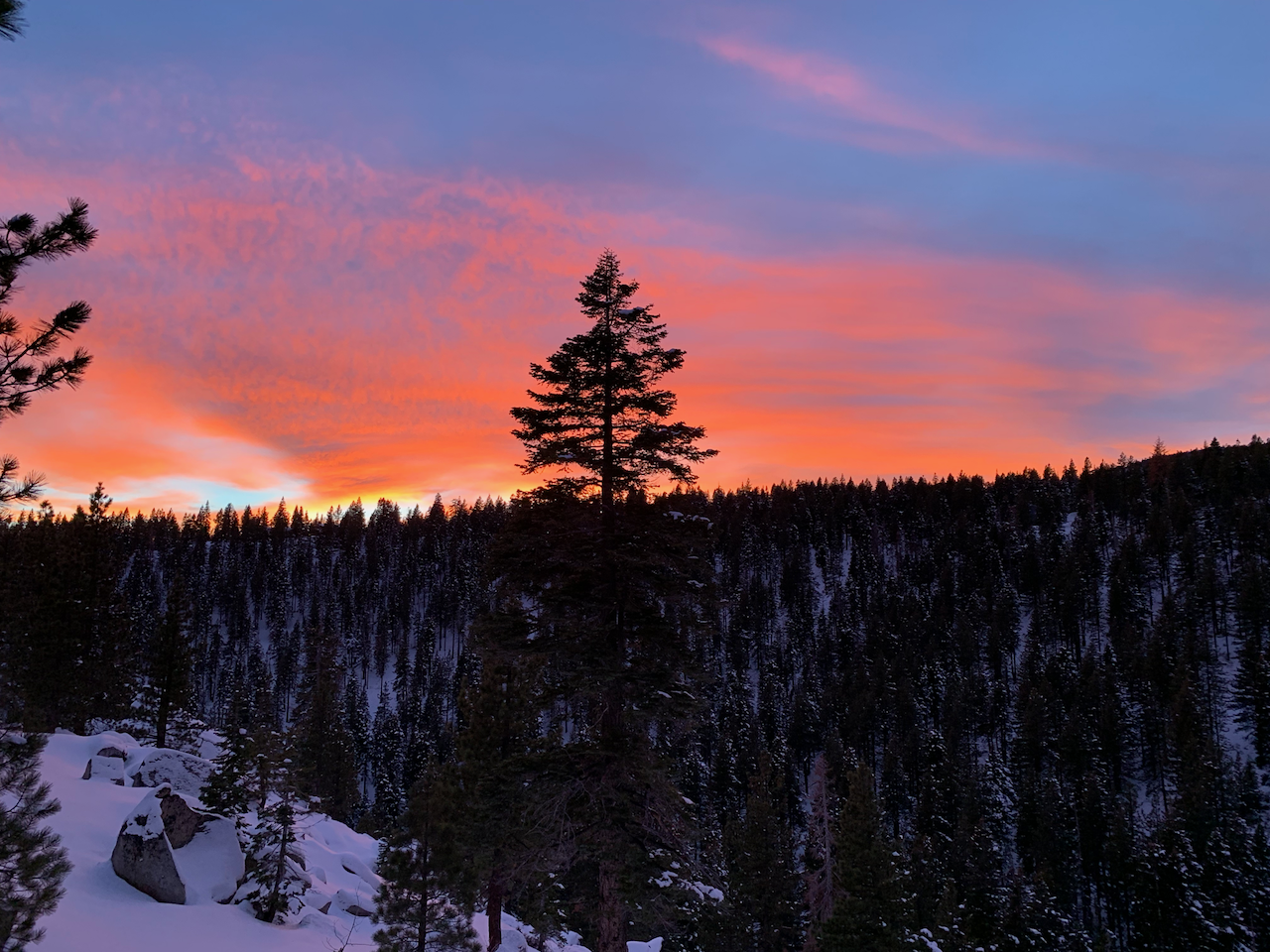 A lone pine tree sits atop a mountain ridge in Lake Tahoe