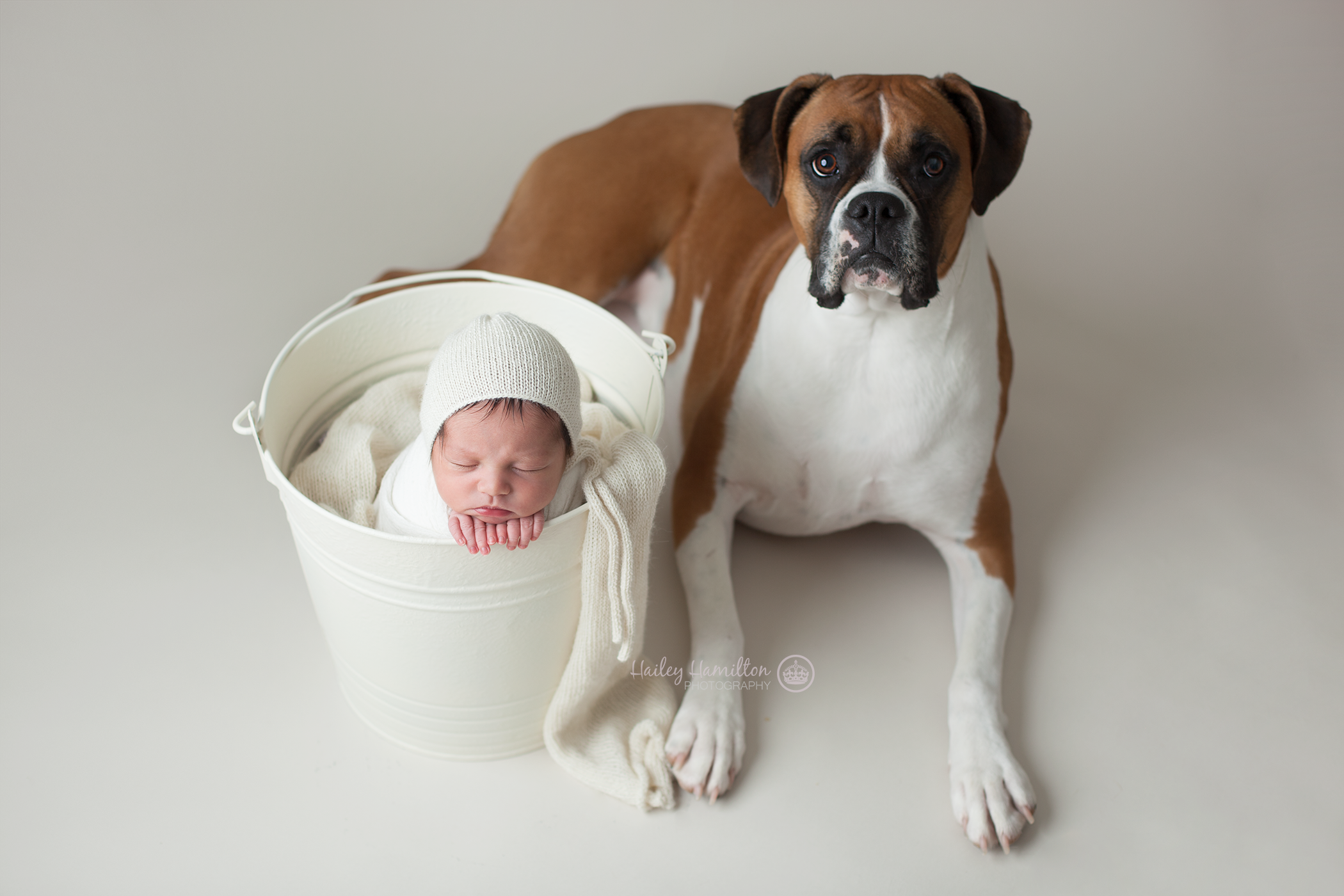 Newborn photography session with pet dog