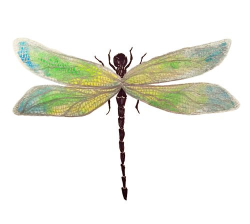 dragonfly.small.png