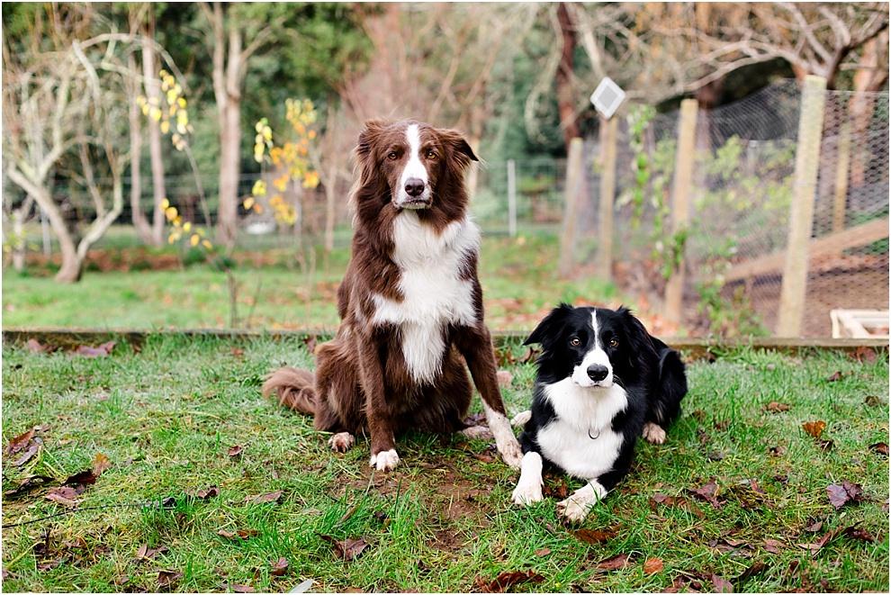 melbourne family lifestyle photographer_0259.jpg