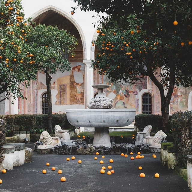 Why pick them, when they can just fall for you? Loved seeing all the citrus  in bloom around Naples. If only the fountain was flowing. 🇮🇹