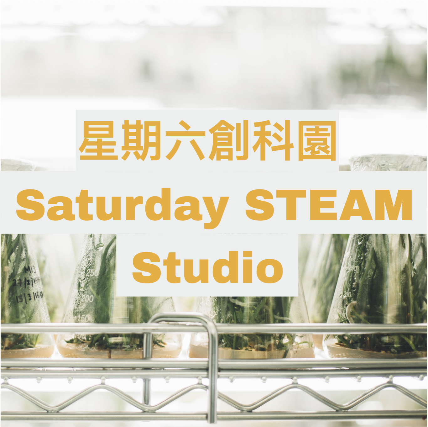 Every Saturday | 2pm-3pm  Starting on 16 March  From farms to films, Saturday STEAM Studio is an  intergenerational workshop  that provides ample opportunity for you  to make things with your hands.