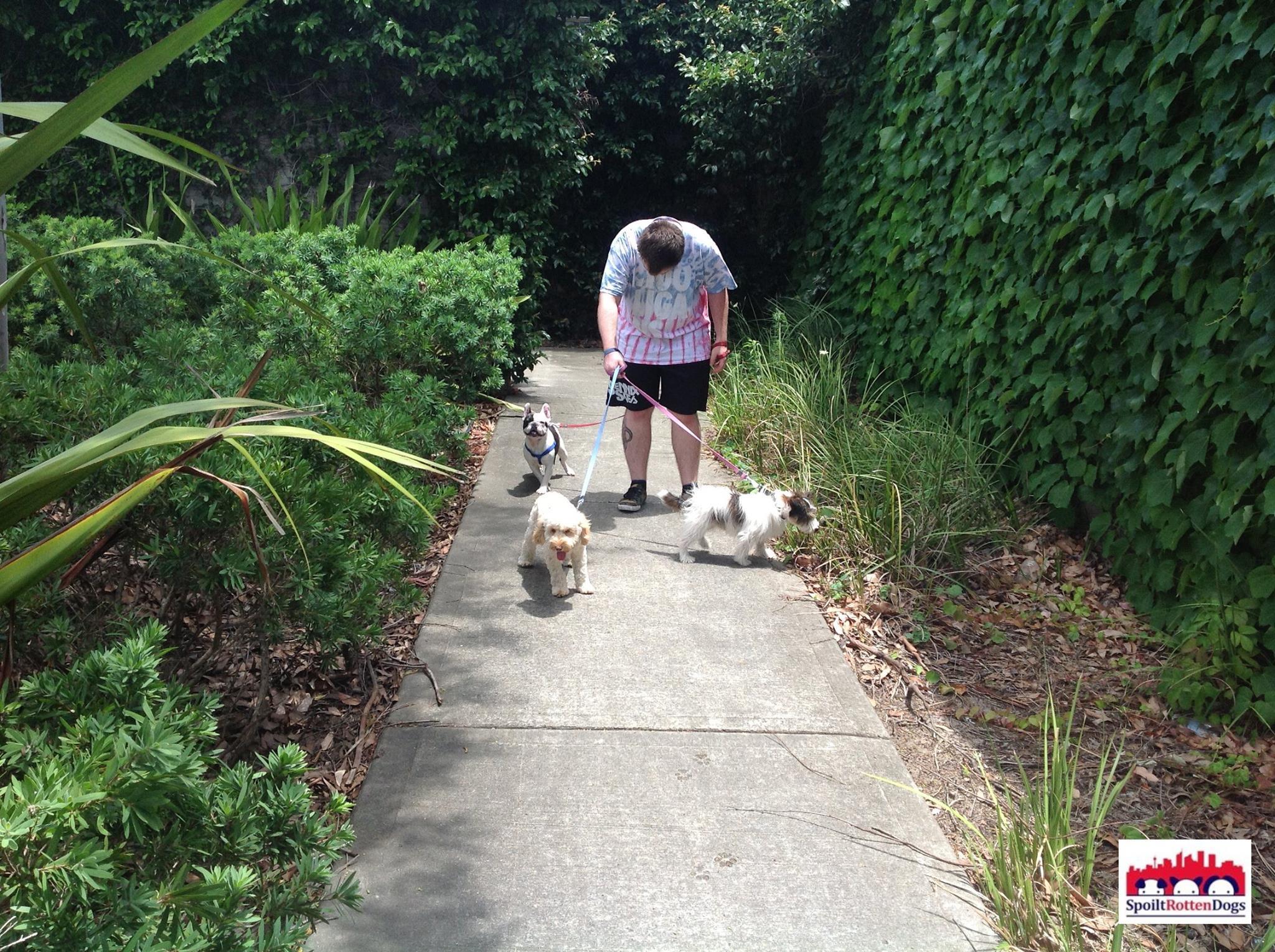 dog-walking-sydney.jpg