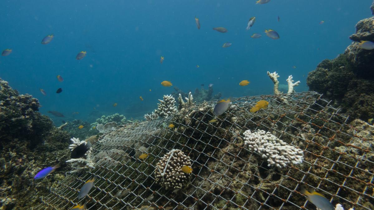 Underwater170502-07157.JPG