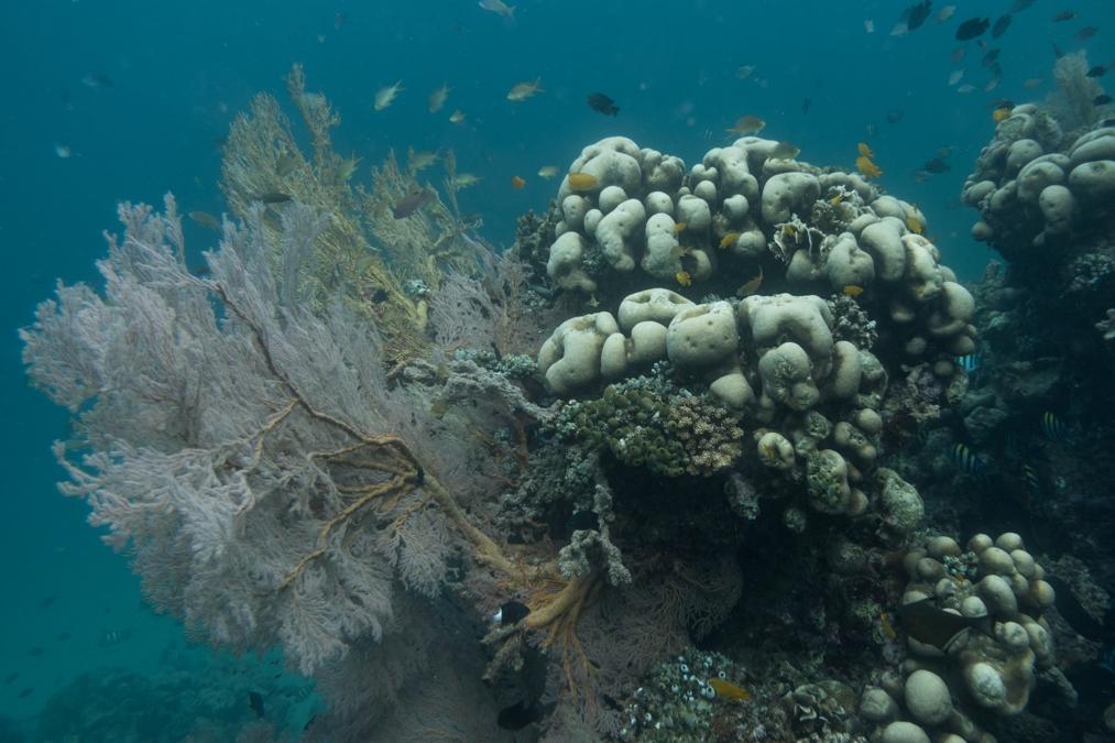 underwater170509-07808.JPG