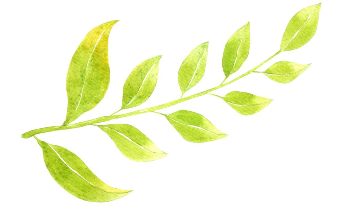 赤ちゃんにおなじみの大事な成分「葉酸」に加え、別名「皮膚のビタミン」とも言われる「ビオチン」、更にイタドリ根エキス、オウゴン根エキスをはじめとする7種の天然植物エキスが、水分を逃さずぷるぷる肌をサポートしてくれます。また、92%の天然由来成分と特徴的なクリーミーな泡で、刺激を与えすぎず、優しく、やわらかく洗うことができるのです。