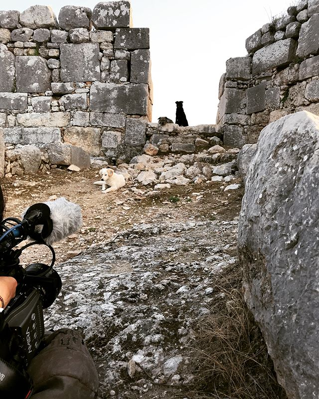 Shooting #stray with @lizbokinglo #strayfilm #featuredocumentary #documentaryfilm #documentary #shootinginturkey #filmmakers #filmproduction #producing #womenfilmmakers #onset #shoot📷