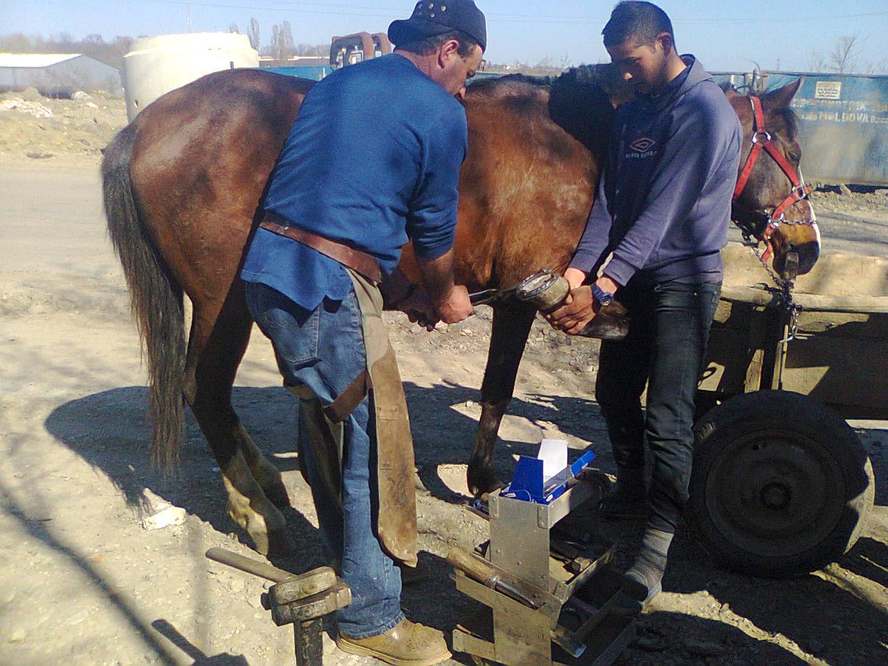 Hufschmied Petrika beschlägt ein Pferd fachgerecht mit unseren beliebten deutschen Spezialhufeisen. Der Besitzer hatte alle Auflagen erfüllt. Das Pferd ist gut genährt und gut gepflegt, der Besitzer hat sich diese teure Belohnung verdient, das ist eine NACHHALTIGKEIT die wirklich die einzelnen Pferdeleben dauerhaft verbessert !!