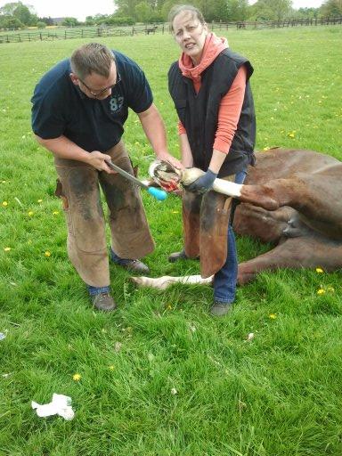 Raabe und Hild operieren ein Pferd auf einer Wiese.