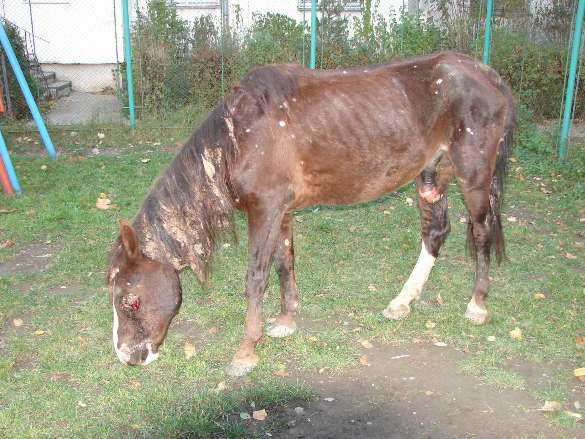 verstümmeltes Pferd auf einem Spielplatz in Rumänien