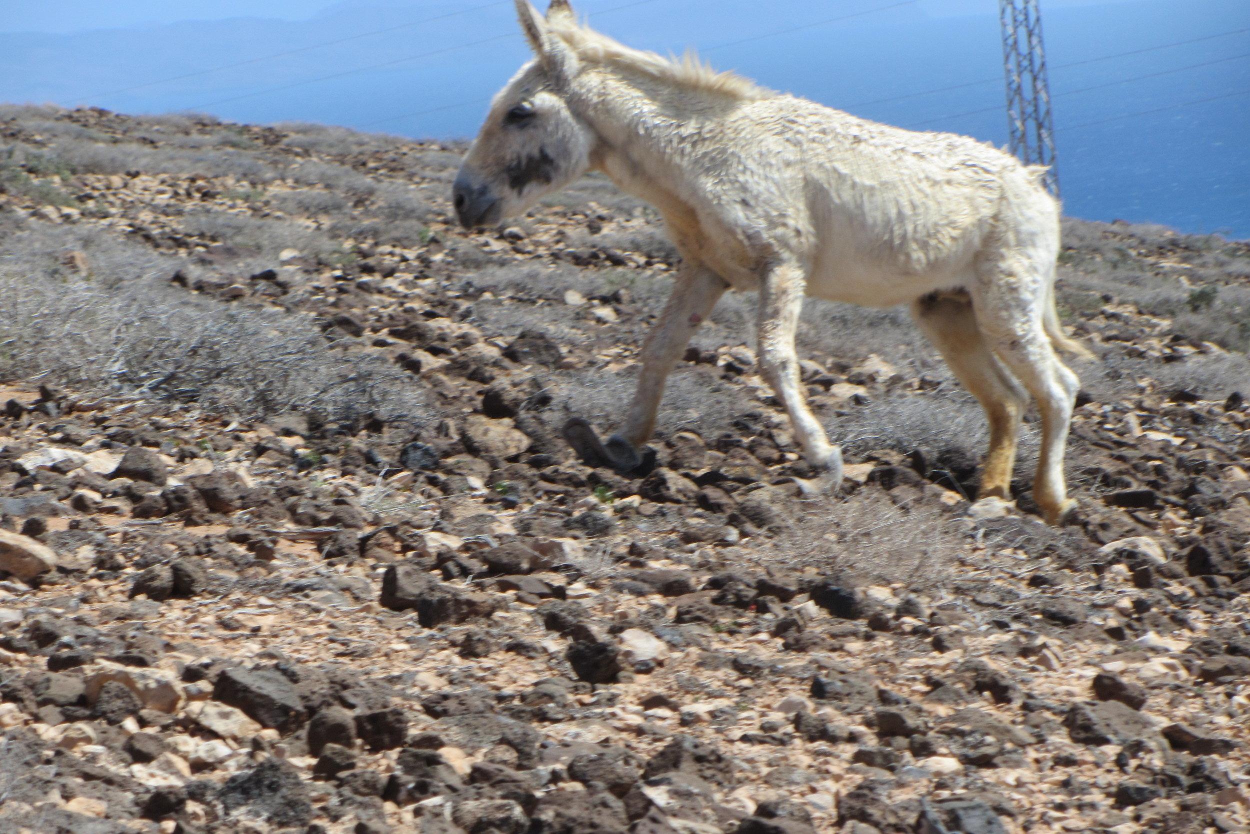 Fuerteventura-081.jpg