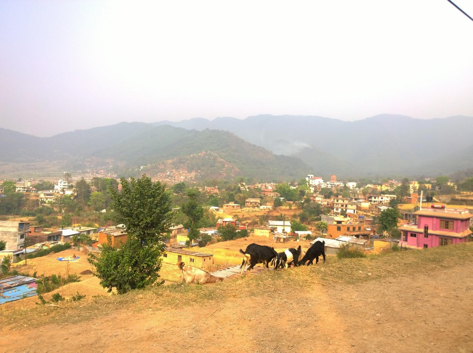 Nepal, das Land ist bitterarm und kriesengeschüttelt.     Die schrecklichen Erdbeben, wirtschaftliche Sanktionen, Rationierung     der Energie wie zB Strom und Benzin und die politisches Instabilität machen      es der Bevölkerung sehr schwer. Die Leidtragenden sind immer die Schwächsten,     also die Kinder und die Tiere.