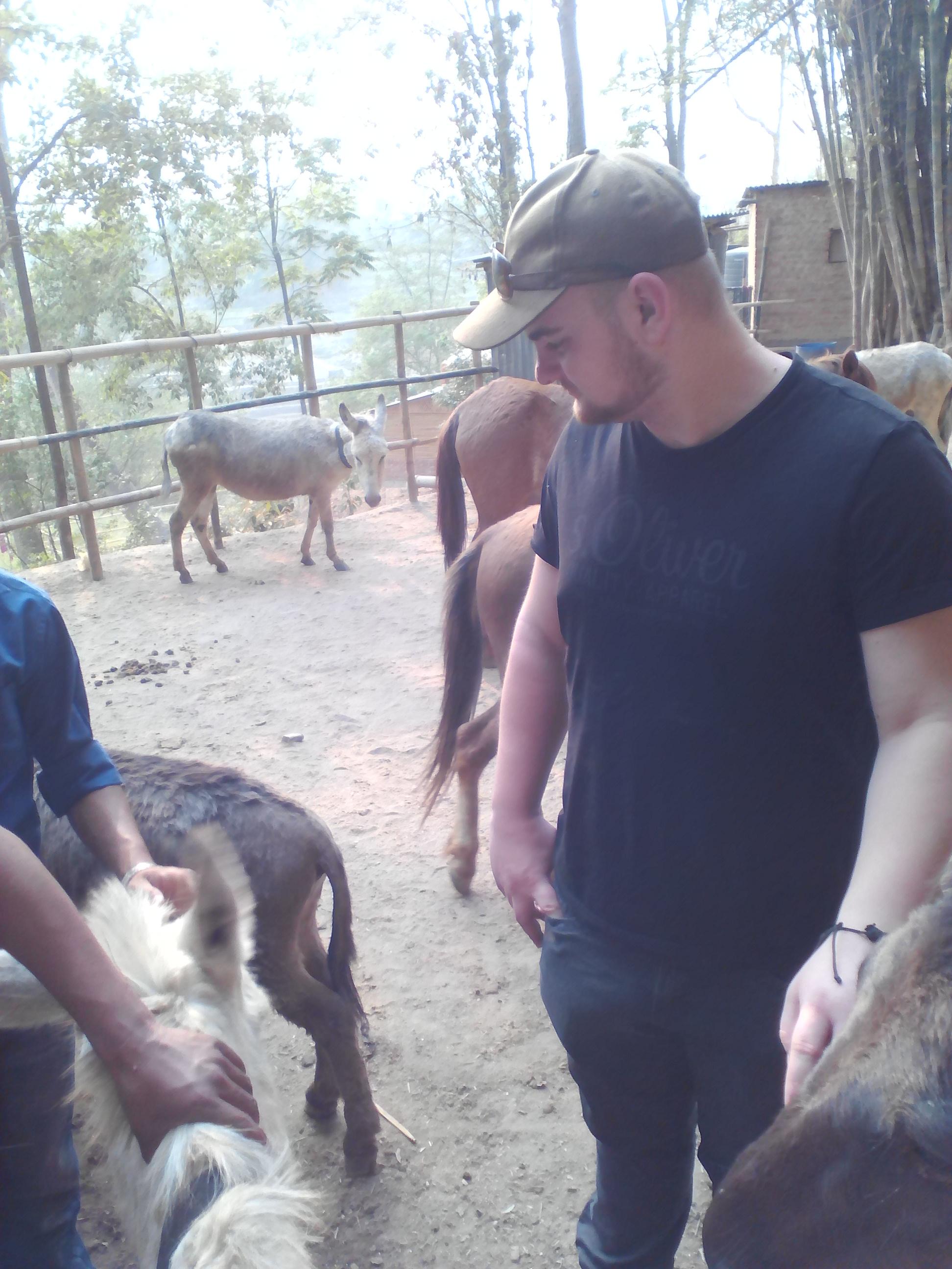 Jannis Raabe. Es wurden Ponys, Esel, Ziegen und Kühe     vom Team Equiwent in Nepal behandelt.