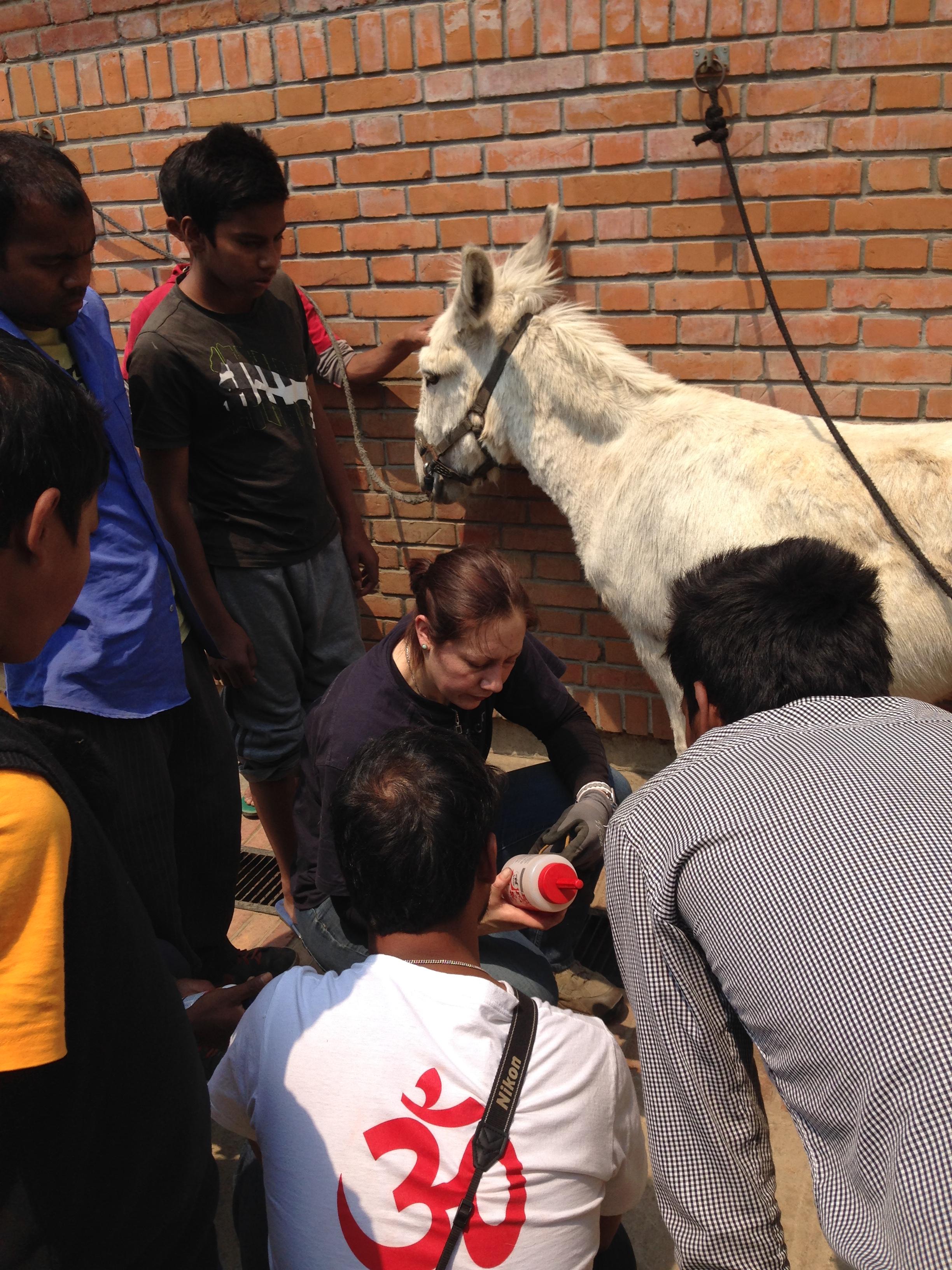 Tiffany erklär die spezielle Barhufpflege für Esel.