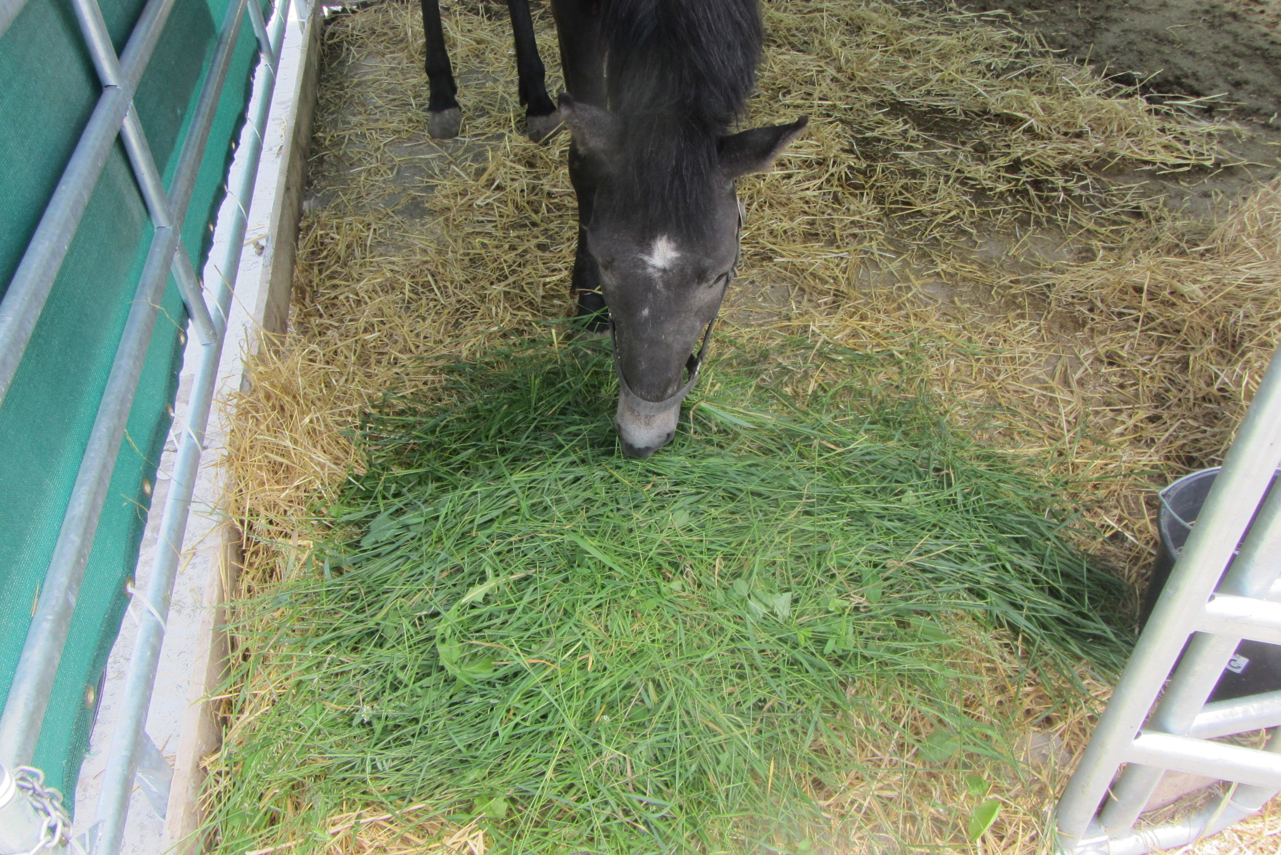 ein gerettetes Pferd in unserer Obhut  .