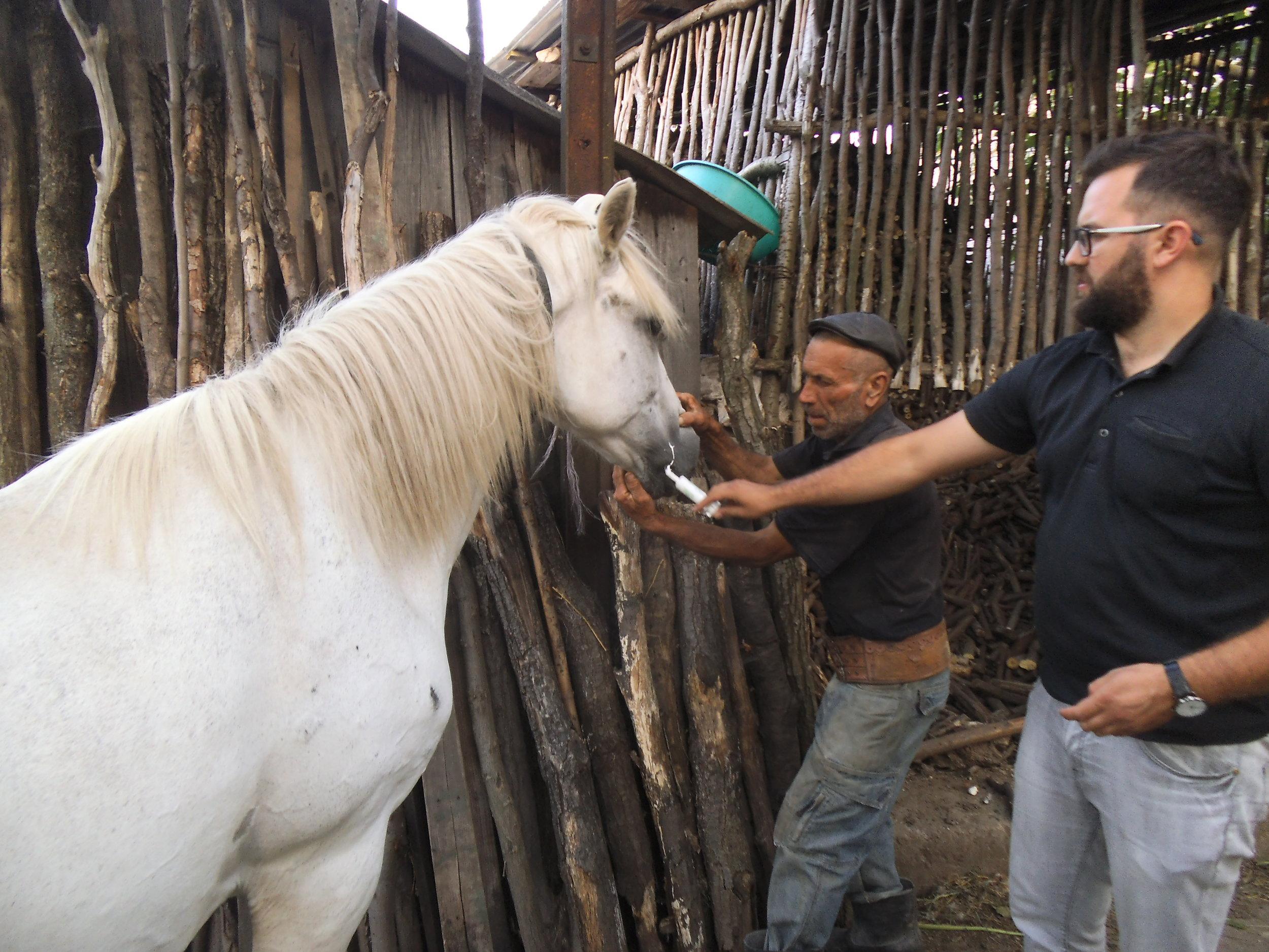 der Klinikchef in Ostrumänien. Dr.Alexander entwurmt     im Sommer viele Arbeitspferde. Die Hilfe von Equiwent ist     unverzichtbar geworden.