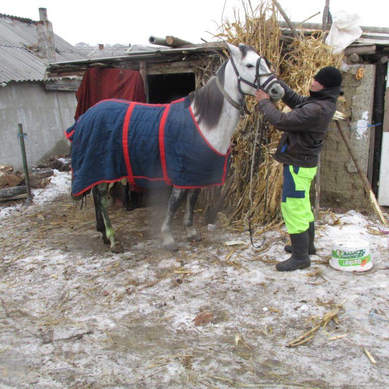 Wir sind stets beim Pferd!
