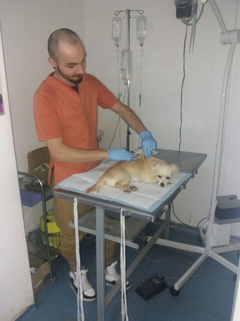 Die Equiwent -Pferdeorganisation kümmert sich natürlich um   alle Tiere. Für die Hunde haben wir jetzt einen eigenen Klinikbereich ausgebaut.