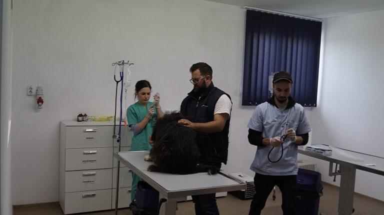 In der Equiwent-Tierklinik in Suceava / Ostrumänien   halten wir ausgezeichnete Tierärzte /moderne Röntgentechnik/   Ultraschall/ Elektrochirurgie und geeignete OP-Räume bereit.