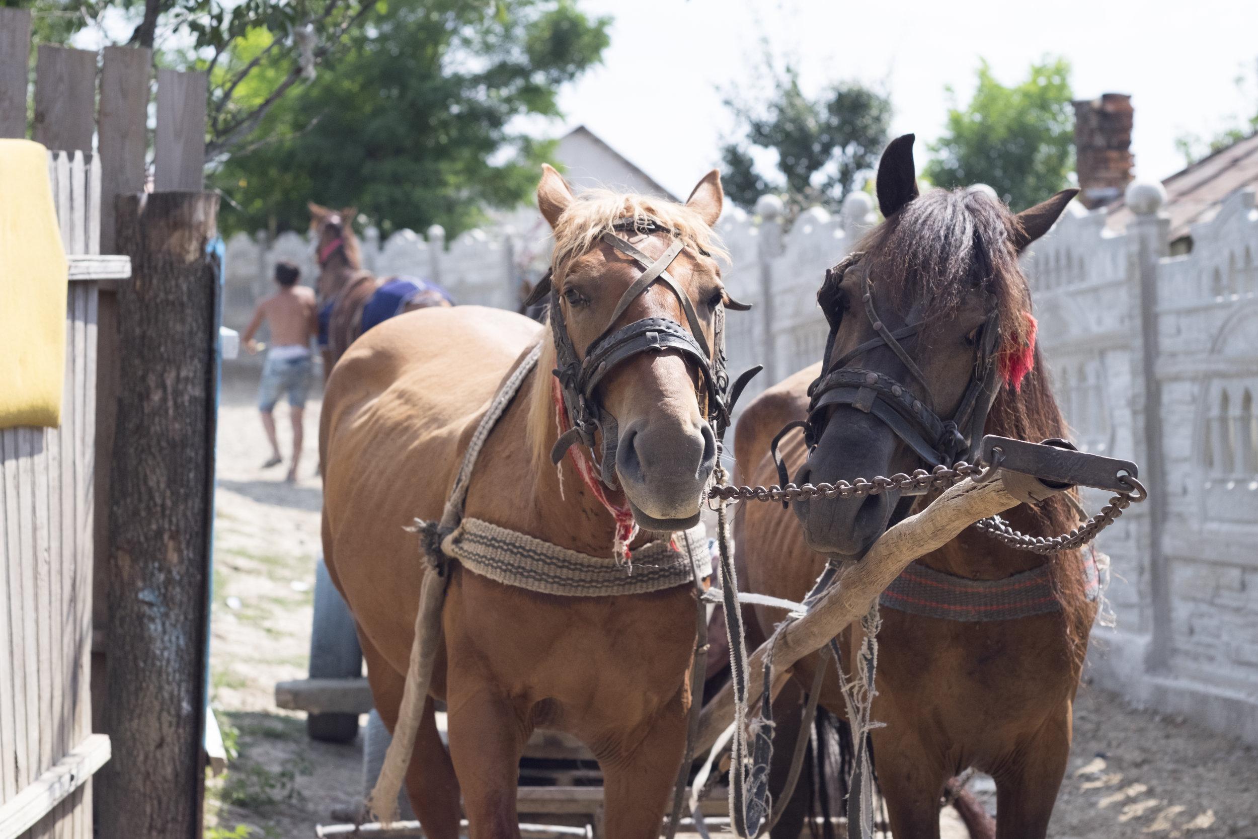 Hilfe für die Pferde -