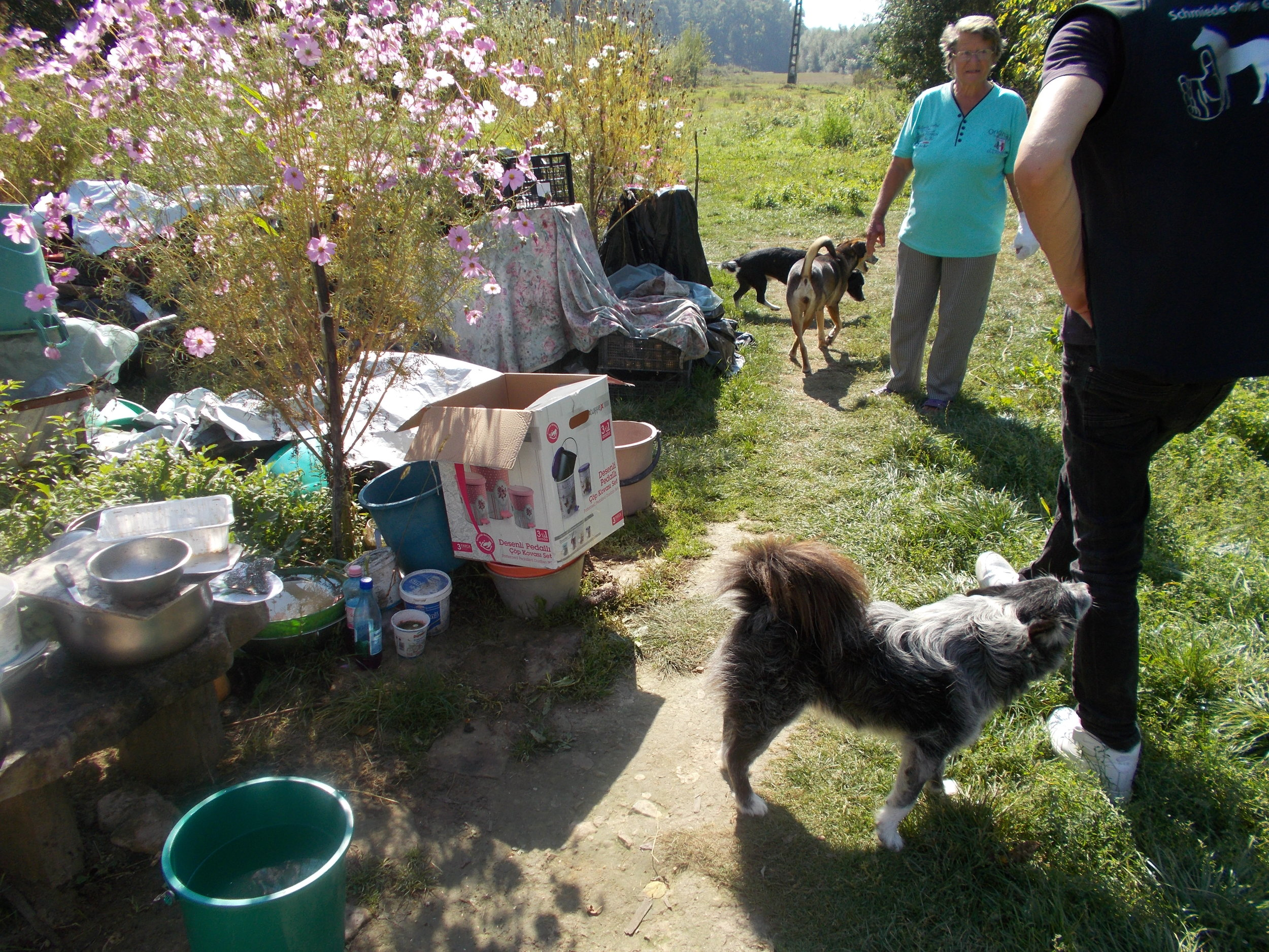"""Unser """"Hundetaxi"""" im täglichen Einsatz. Diese liebe Frau hat einigen Hündinnen und Rüden ein nettes Zuhause in ihrem Garten gegeben. Sicherlich können Sie sich gut vorstellen wie dankbar diese Dame ist das nun alle Hunde kastriert sind. Eine große Erleichterung für Mensch und Hund!"""