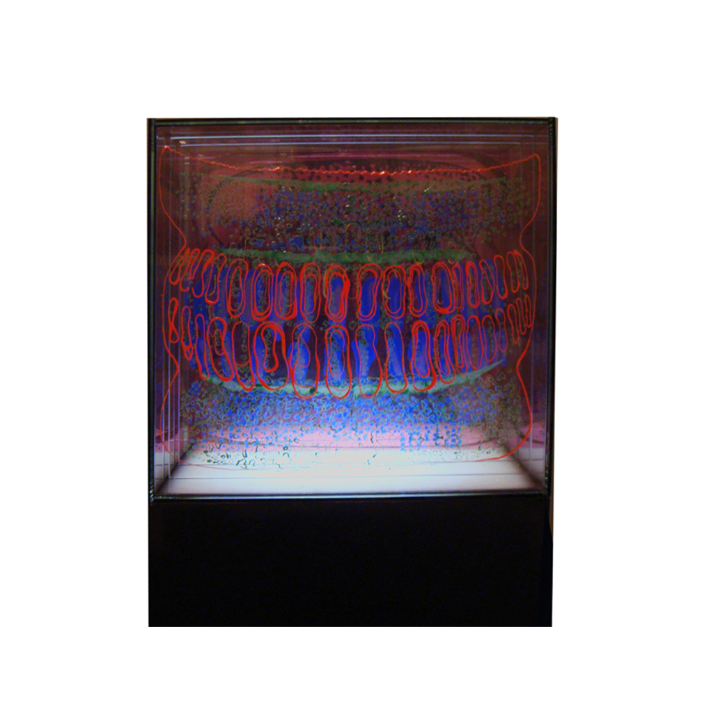 14_Diatom_ 7 layers of painted and fired glass with LED light panel and wooden pedestal_30 cm x 30 cm x 30cm_2013.jpg