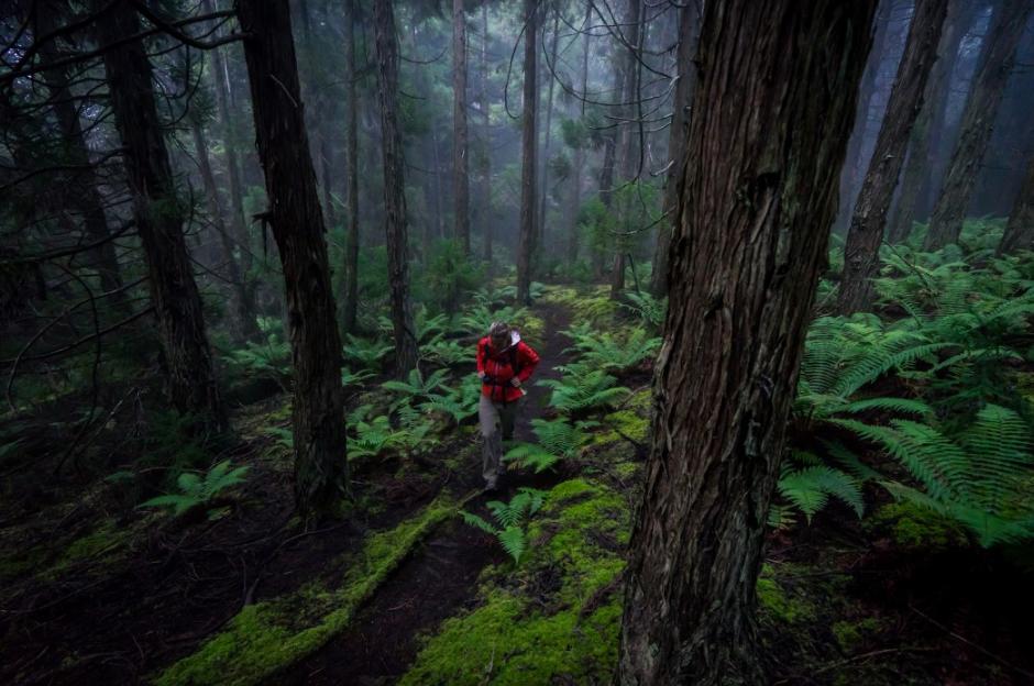 POLIPOLI SPRING STATE RECREATIONAL AREA & FOREST RESERVE, KULA MAUI trail hike.jpg
