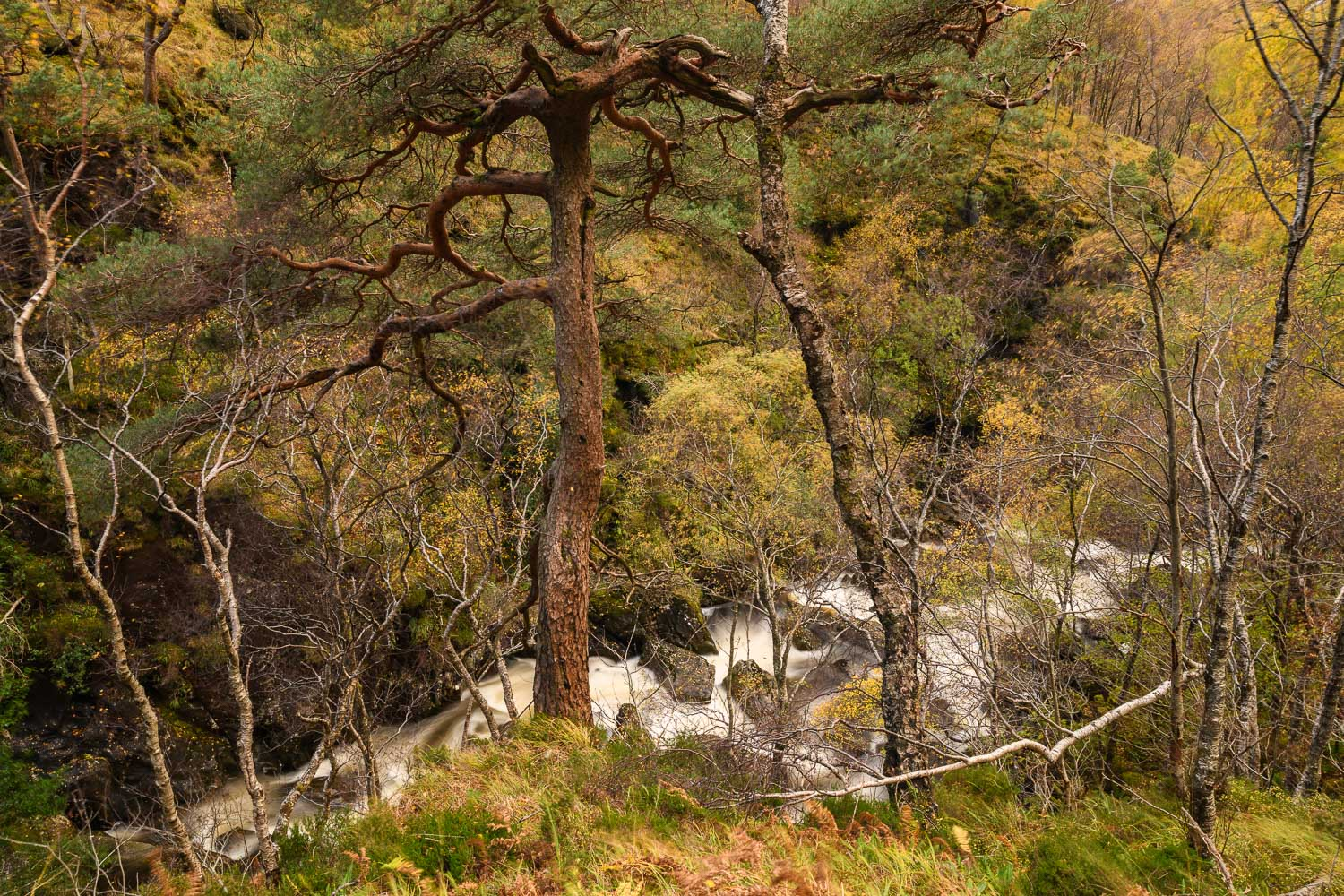 Autumn in Glen Nevis