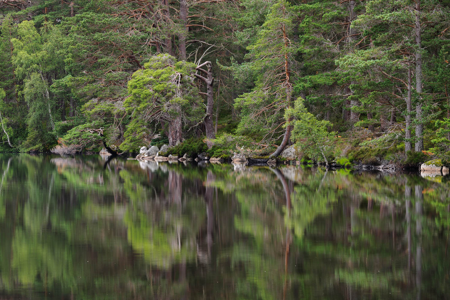 Loch Garten Reflections