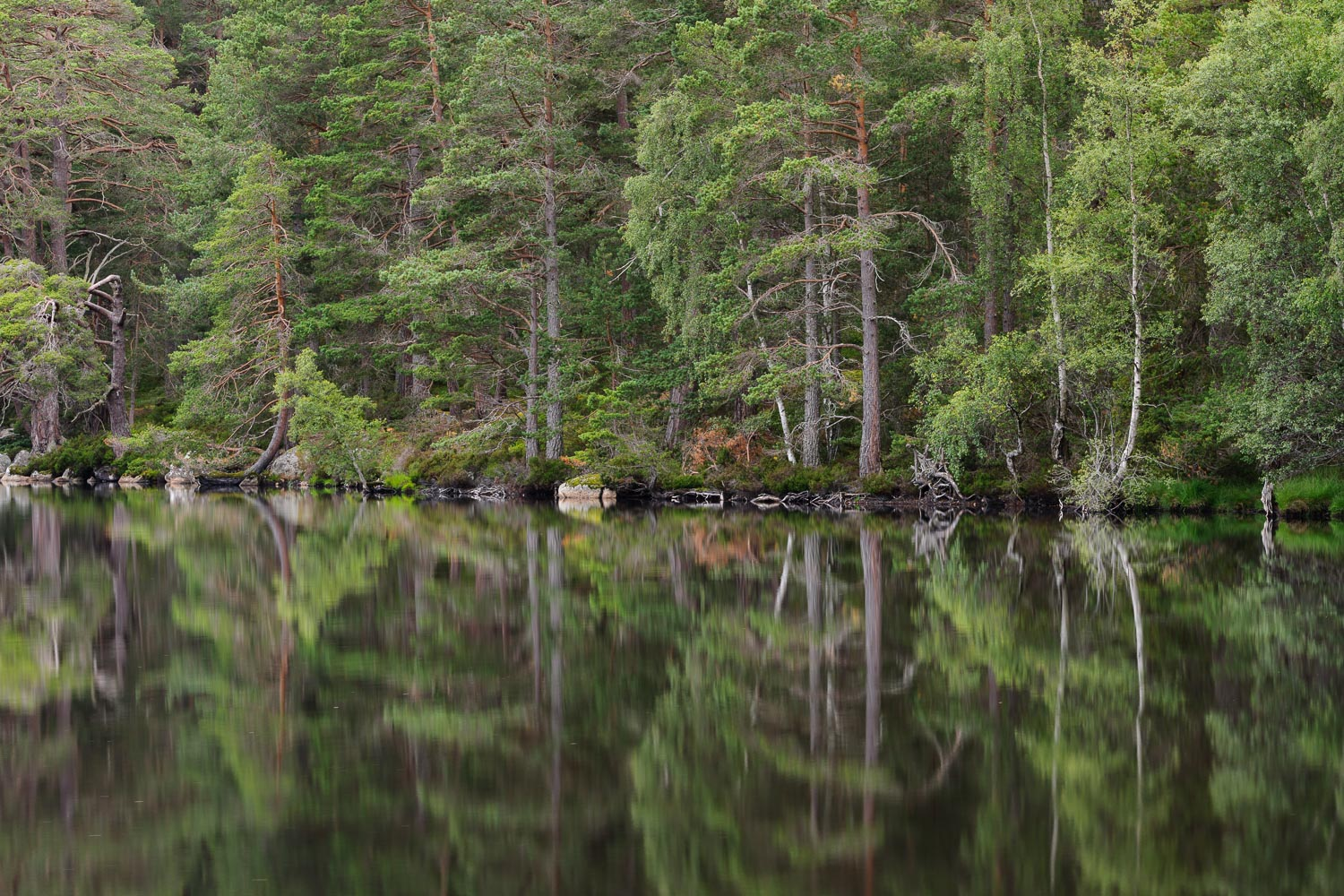 Loch Garten Reflections 2
