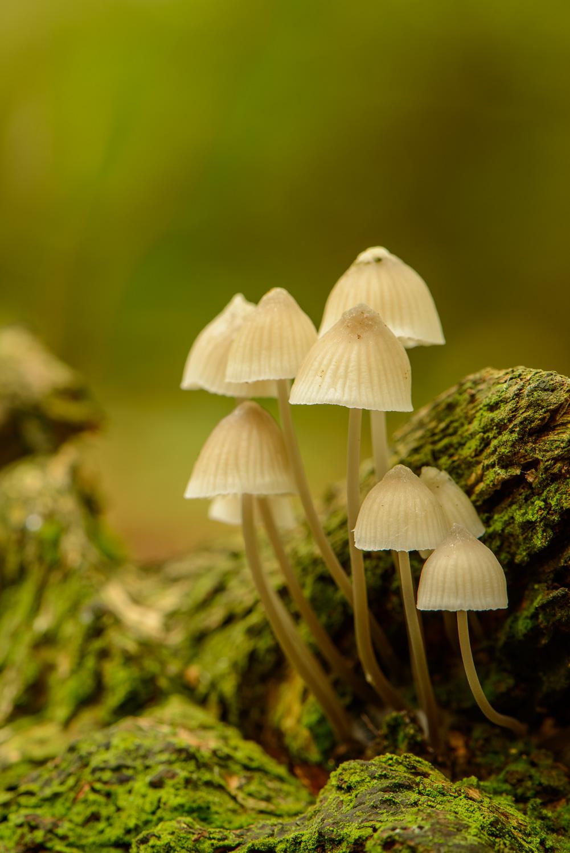 Fungi on Fallen Tree Branch