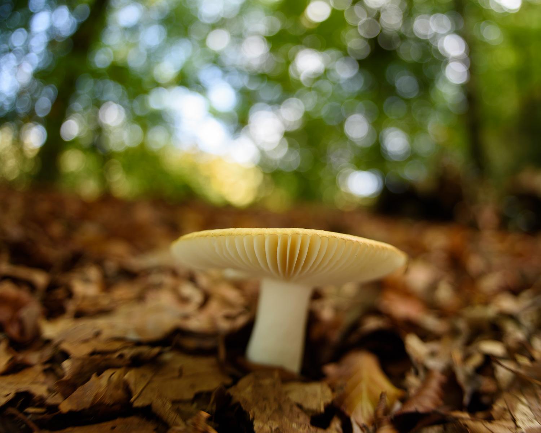 Fungi in Deciduous Woodland
