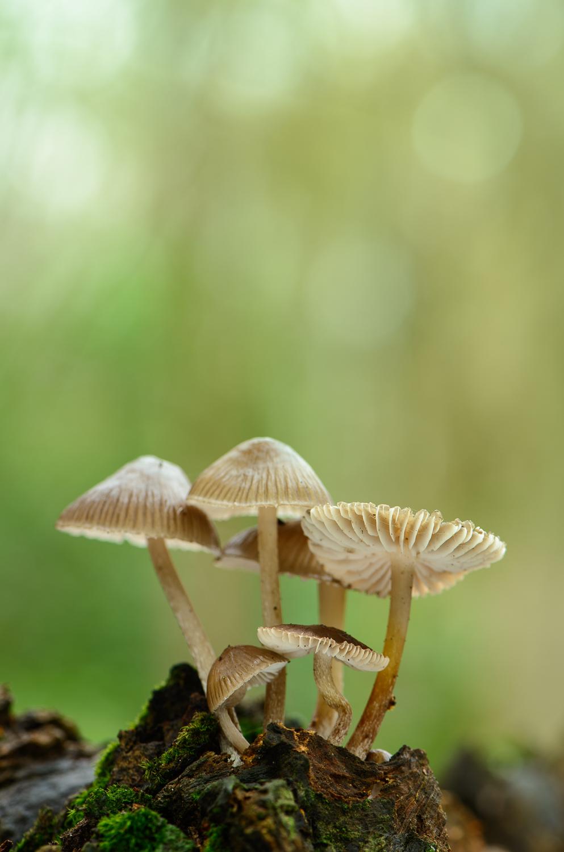 Fungi on Dead Tree Trunk
