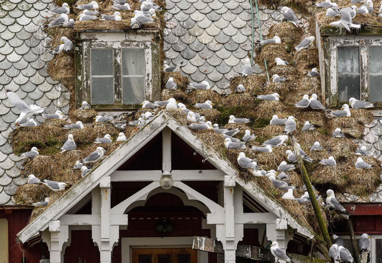 The Kittiwake House
