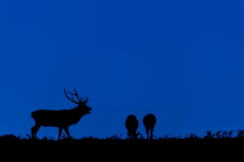 Blue Hour Red Deer