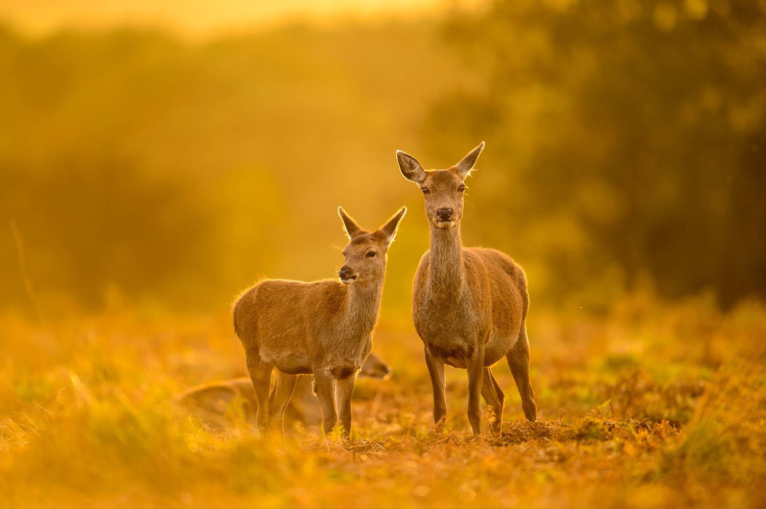 Hind and Fawn