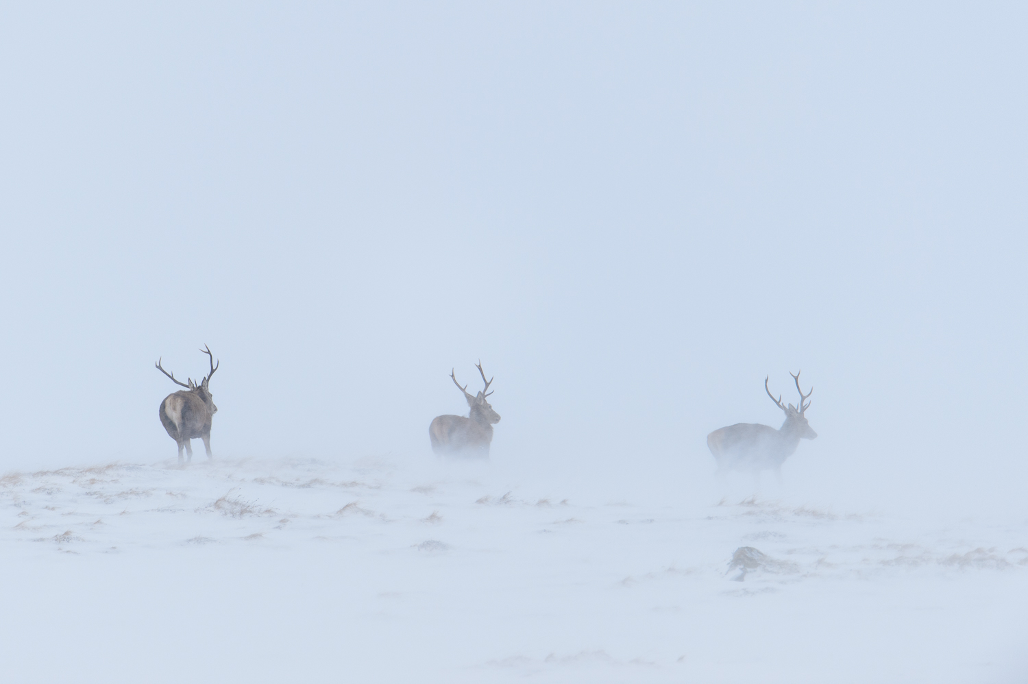 Three Stags