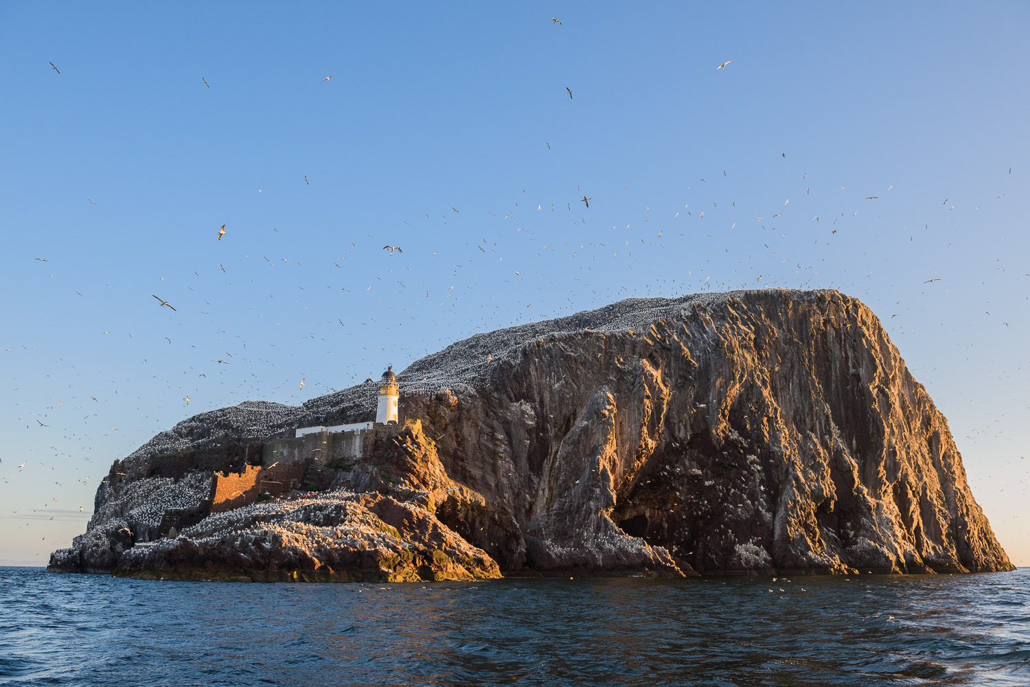 Early morning light on Bass Rock.