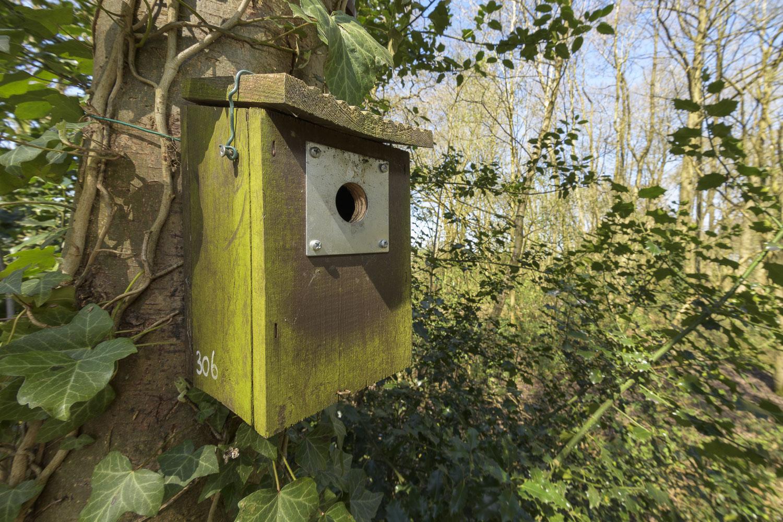 Blue tit nest box at study site in woodland, Birmingham.