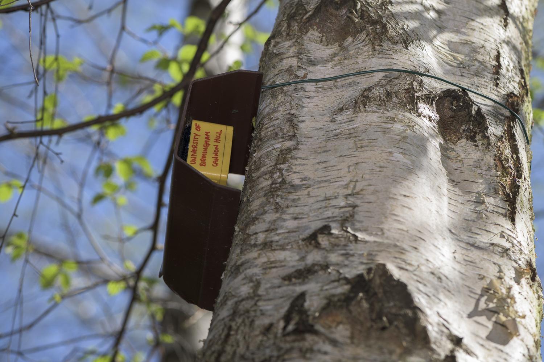 Monitoring equipment on Silver birch tree in woodland study site, Birmingham.