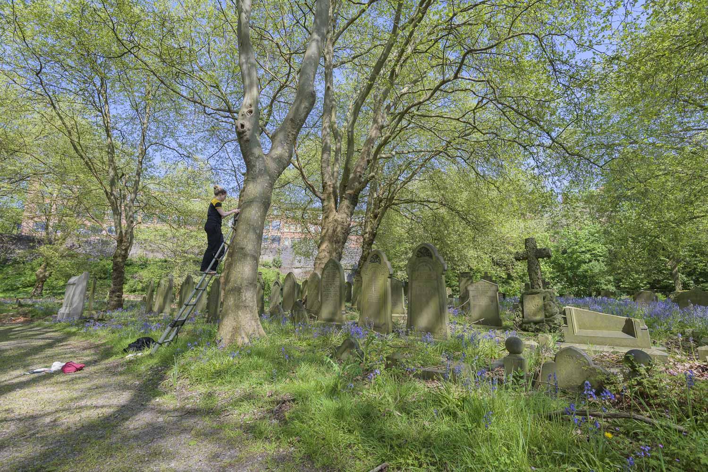 Vicki Pattison Willits inspecting nest box at study site in urban cemetery, Birmingham City Centre.