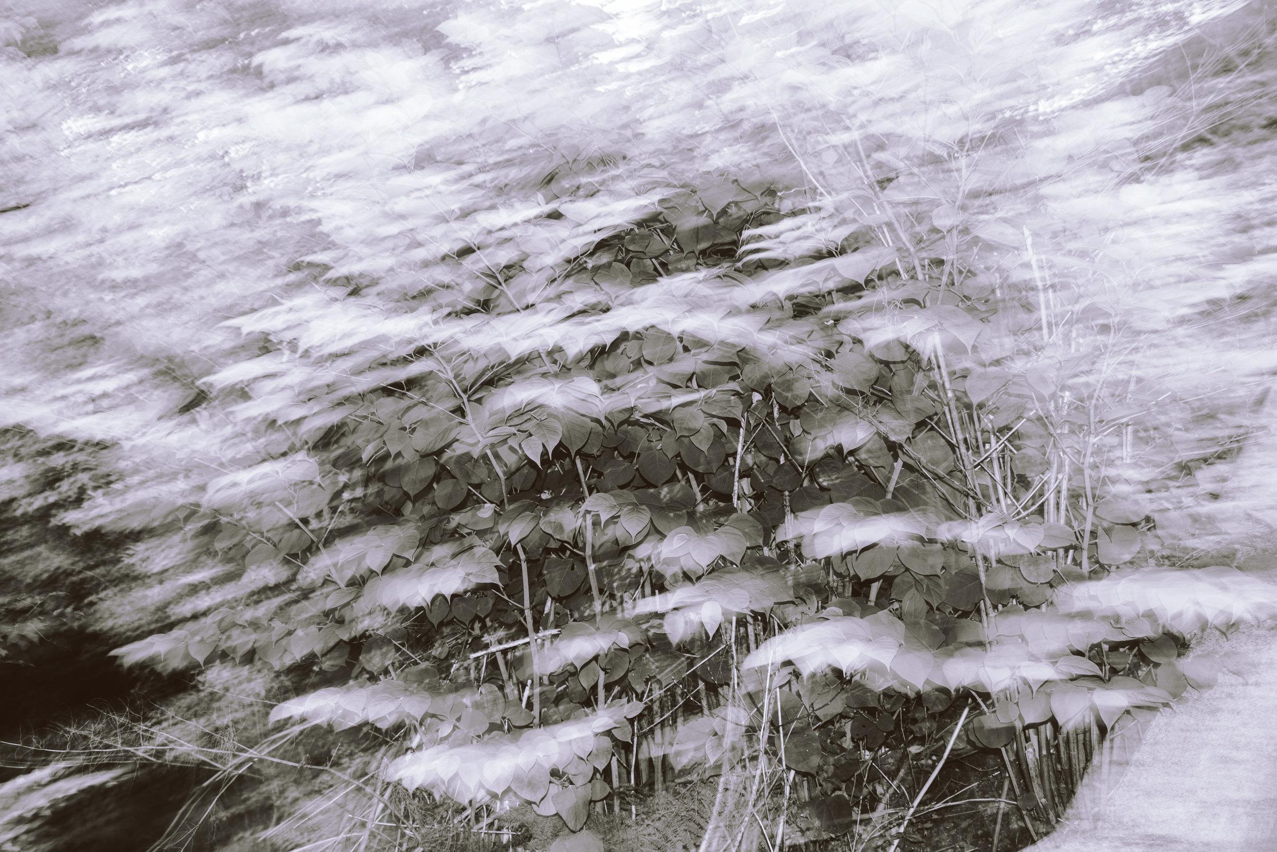 IMG_1959-2.jpg