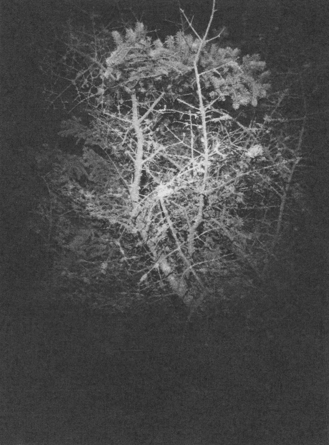 nighttime02web.jpg